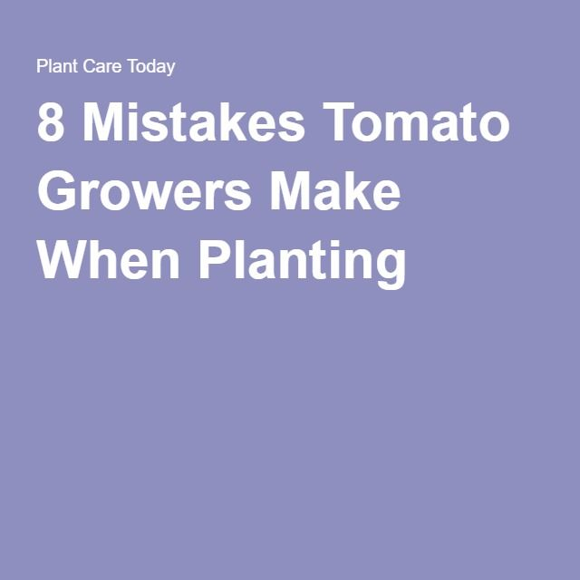 8 Mistakes Tomato Growers Make When Planting -