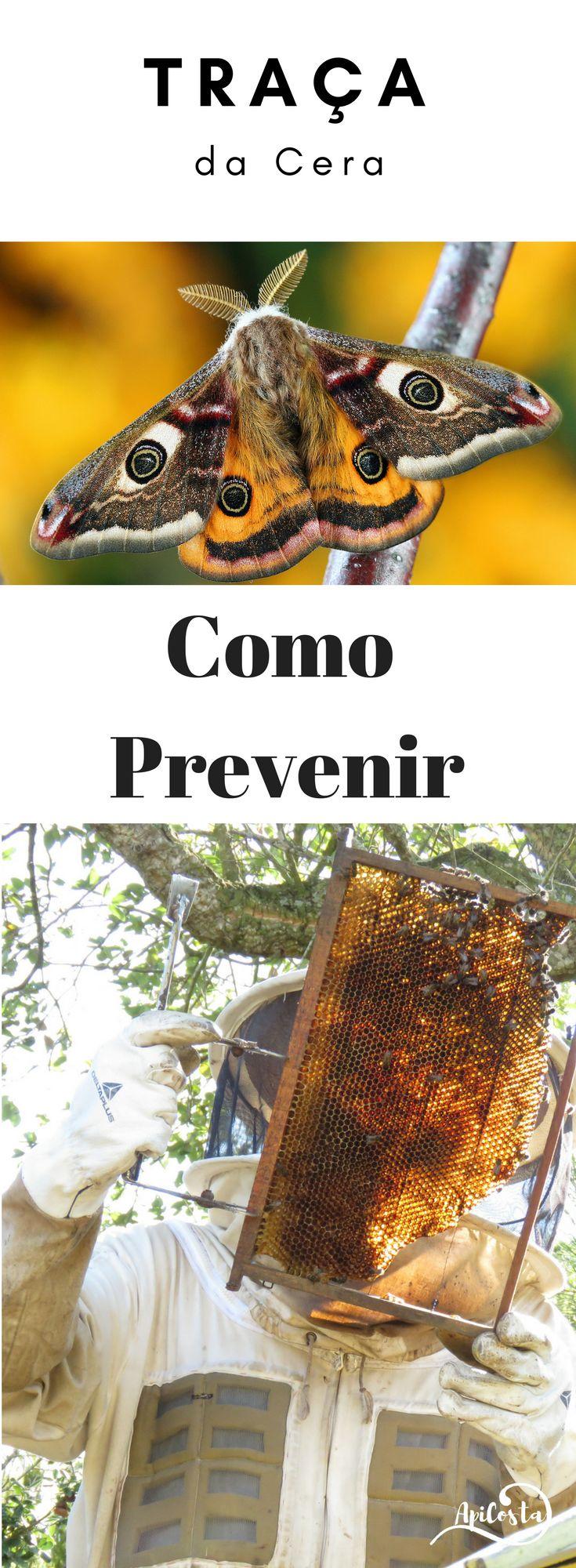 Como prevenir a traça da cera nas colmeias com abelhas e sem.