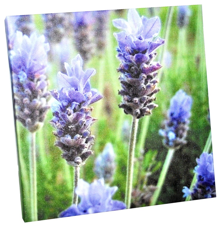 It's almost as if you can smell lavender!   Floral painting 20x20x2 cm (14,99 lei), Bam Boo, Baneasa Shopping City