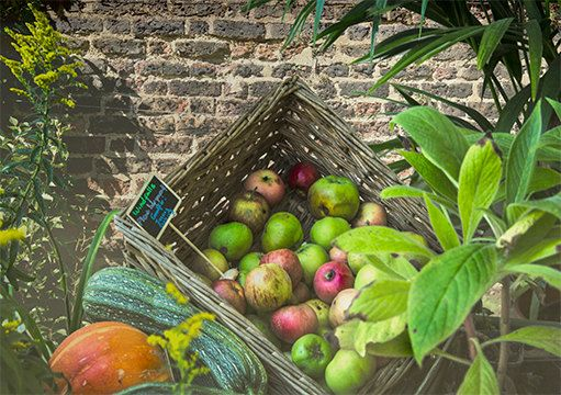 A6 Greeting Card Autumnal  Windfall Fruit and Veg  by Fast4Wards