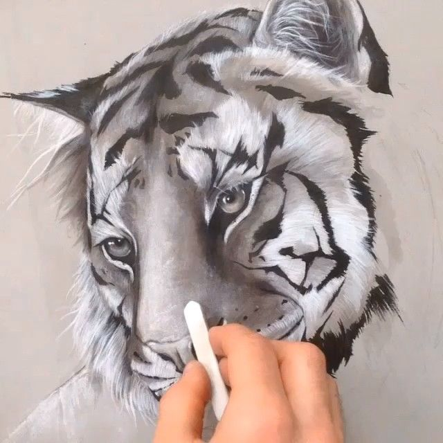 sol whiteside artist tiger close
