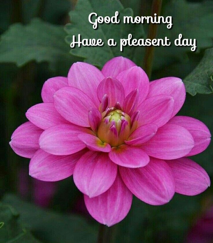 Pin By Chow Chow On Good Morning Good Morning Flowers Morning Flowers Good Morning Cards