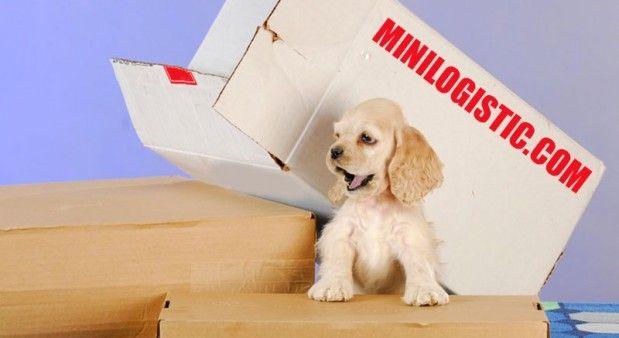 Квартирный переезд и домашние животные