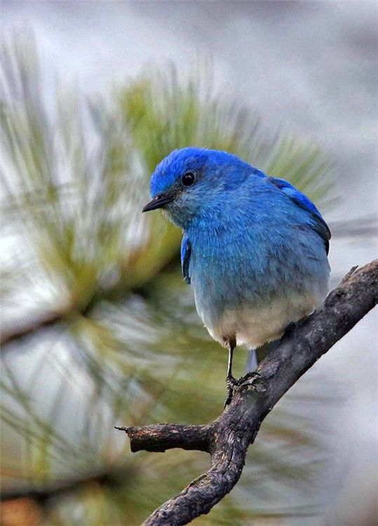 Фотографии птиц Кенна Кристенсена (Kenn Christensen) | Fresher - Лучшее из Рунета за день