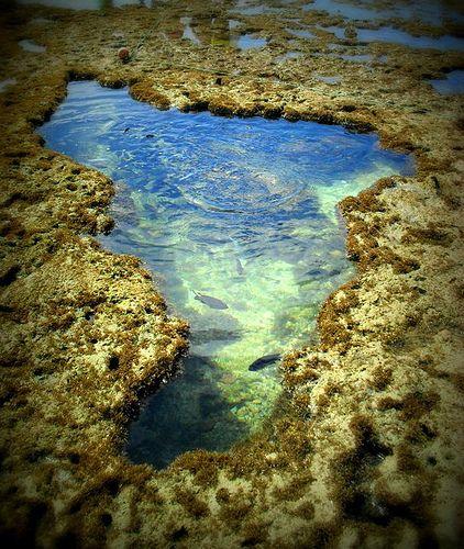 Porto de  Galinhas PE. Esse lago que se forma na maré baixa fica cheio de peixes. Adorei nadar com eles.