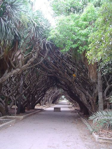 Jardin d'Essai, Algiers, Algeria so pretty but I have to wonder if that box in the middle of the rd has Gwyneth Paltros head in it ;)