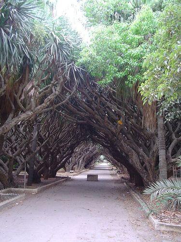Jardin d'Essai, Algiers, Algeria