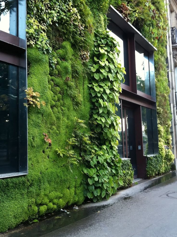 Gsky Living Green Walls: Best 25+ Green Facade Ideas On Pinterest