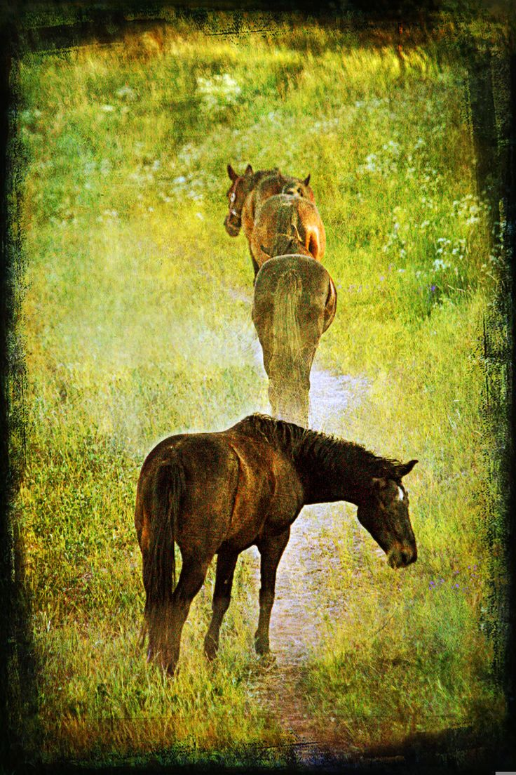 The Last Glance - Horses on pasture.