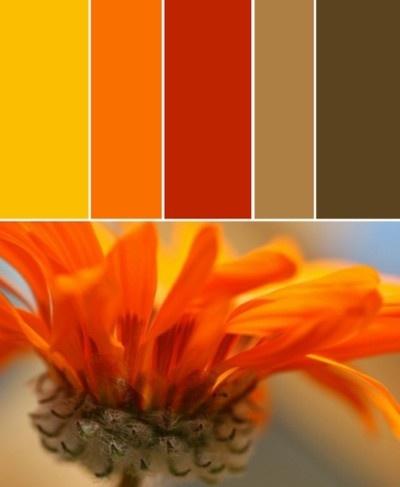 #ColoresQueInspiran paleta cálida de inspiración floral: amarillo, naranja y café.