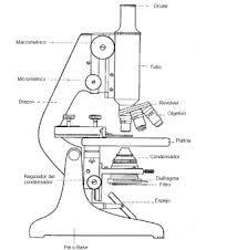 microscopio monocular y sus partes - Buscar con Google