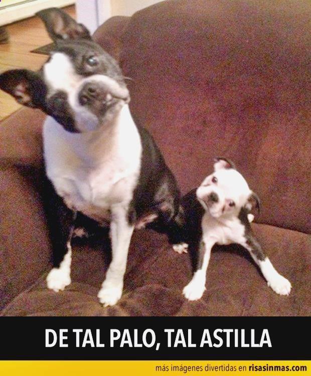 Encuentra lo mejor en memes niño rata, chistes para niños por el dia del padre, humor para adultos gay, imagenes graciosas y de amor y lépicerie du chistera ➛➛ http://www.diverint.com/memes-espanol-graciosos-acapulco-shore/