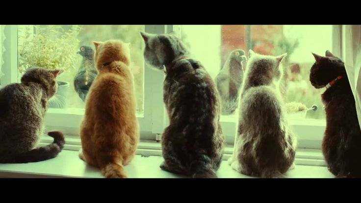 "【YKK AP公式】2015「お留守番」篇 90秒(特別編集ver.) ""House sitting"""