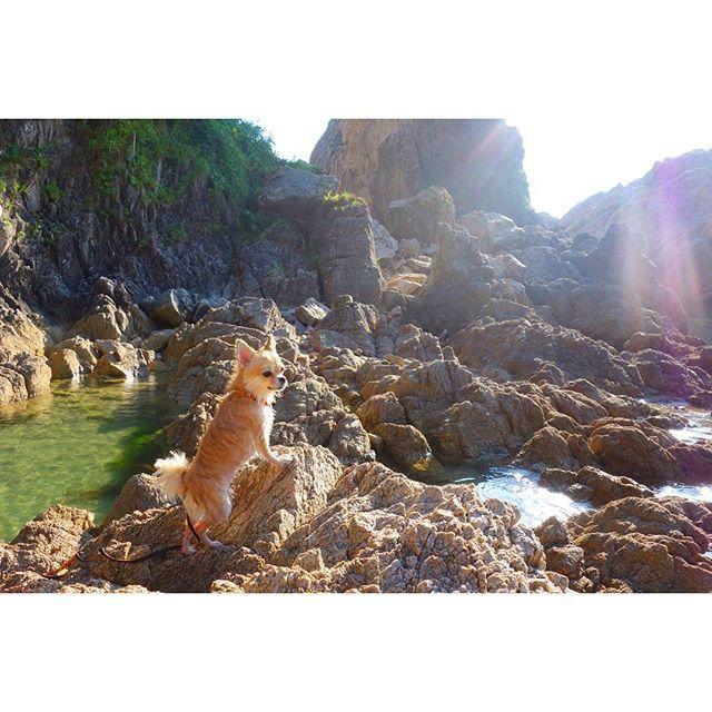 #pomchi#pomeranian#chihuahua#instadog#instadogs#pomchisofinstagram#lovepomchi#lovedog#lovemydog#ポメチワ#4歳#愛犬#インスタドッグ