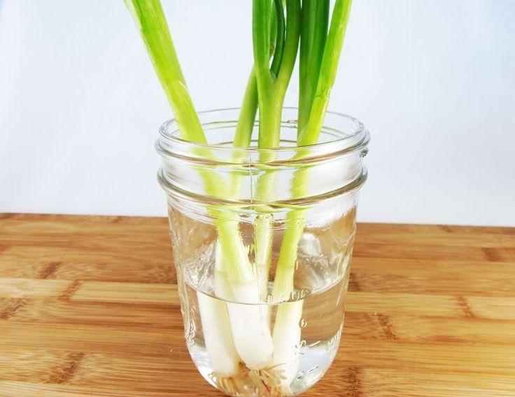 3 ways to keep green onions fresh