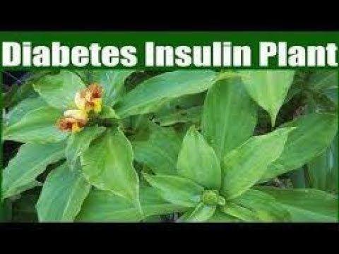 Insulin Plant sa Diabetes - Payo ni Doc Willie Ong #638 | Dr
