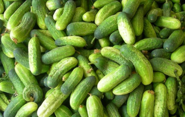 uhorka je najsilnejšou zásaditou zeleninou. Znamená to, že konzumáciou uhoriek zabránime prekysleniu nášho tela