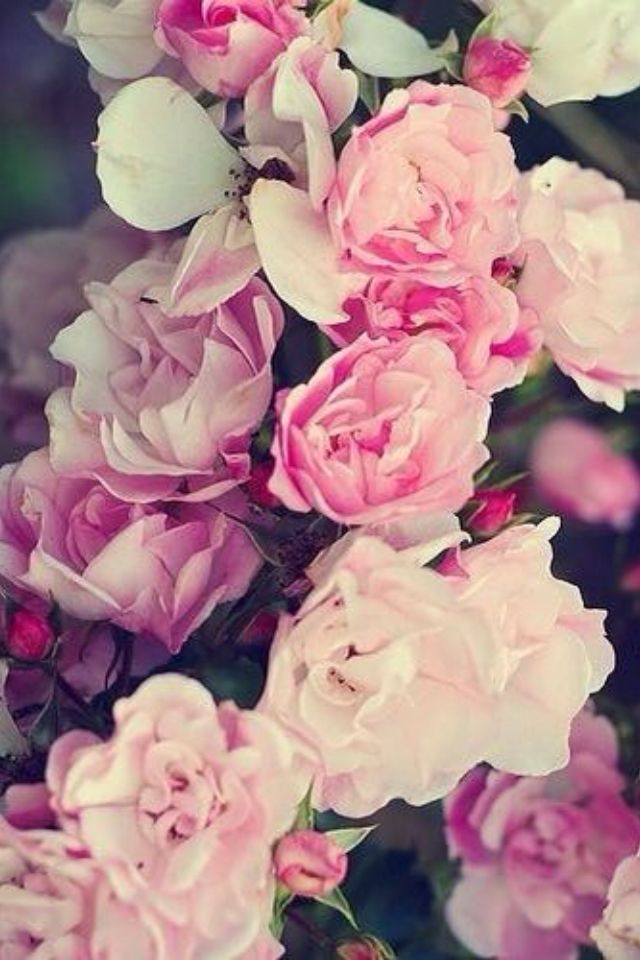 Фон на айфон цветы