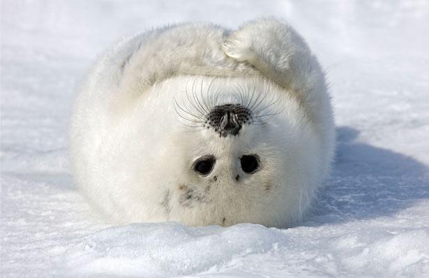 Upside down seal | makes me smile | Pinterest