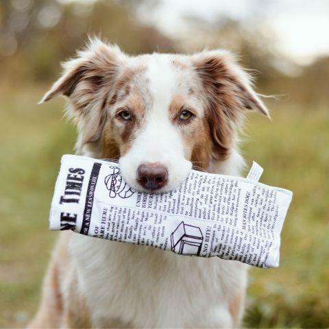 Plush Newspaper Dog toy