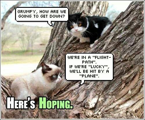 d70edb9b7b9fd317fef8799c994da4df grumpy quotes grumpy cats 705 best grumpy cat! images on pinterest grumpy cat, funny,Get Down Cat Meme