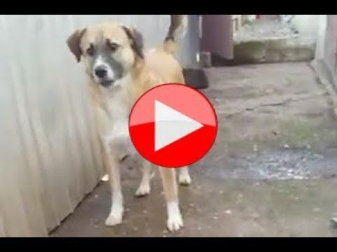 Garibaldi | Romanian Rescue Dog Seeks Adoption