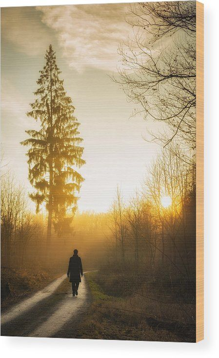 Forest Sunset Wood Print: Warm and beautiful evening light, sunset is waiting. A person is walking on a forest path, beautiful tree in the background. Lovely landscape in the nature park Schoenbuch in Germany. Click through and enjoy the texture and depth of this artwork in your home. Matthias Hauser - Art for your Home Decor and Interior Design.