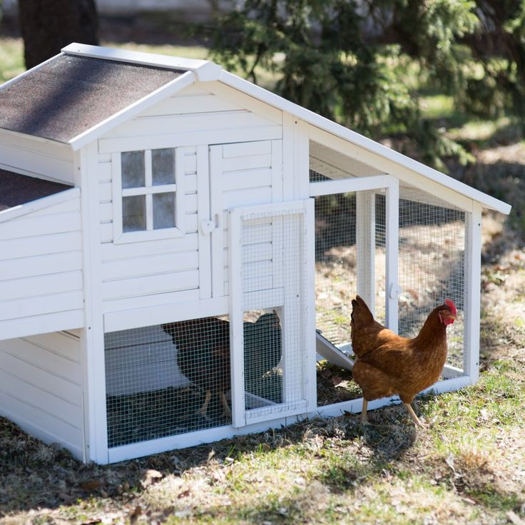 Boomer & George Deluxe 4 Chicken Coop With Run - White Wash - Fresh eggs for breakfast, anyone? The Boomer & George Deluxe 4 Chicken Coop With Run - White Wash will comfortably hold four chickens in style,...