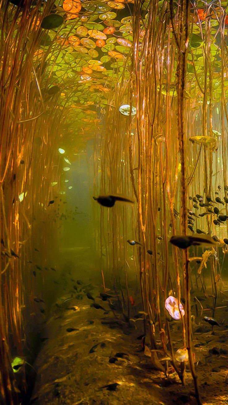 Water Tadpoles Underwater Iphone 6 Plus Wallpaper