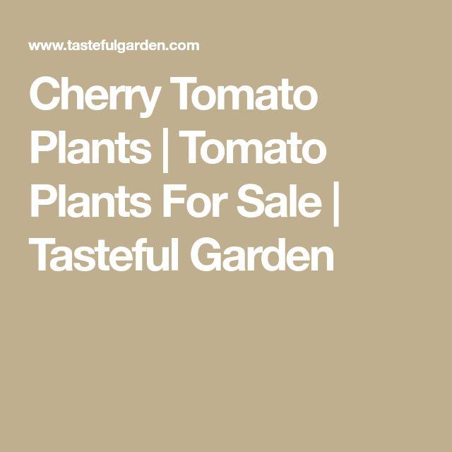 Cherry Tomato Plants | Tomato Plants For Sale | Tasteful Garden