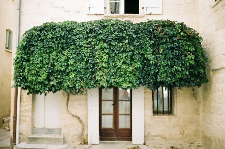 Umbrellas, Vines, Green Wall, Green Gardens, Plants, Front Doors, Trees, Southern France, Provence France