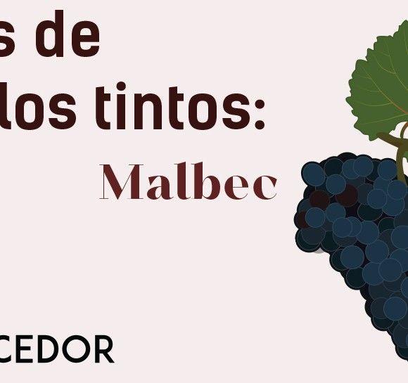 Las uvas de los vinos tintos: Malbec