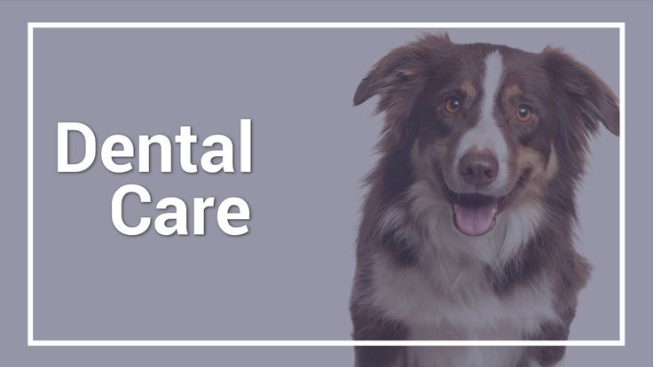 Dr. Greenway shows us how to properly brush dog's teeth. This video also discusses dental cleaning under anaesthetic and symptoms of tooth decay. #dogs #dogsteeth #HCFP