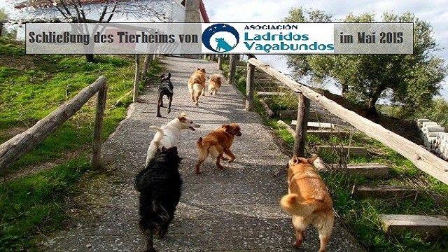 Schliessung des Tierheims in Granada 21 Hunde in Not