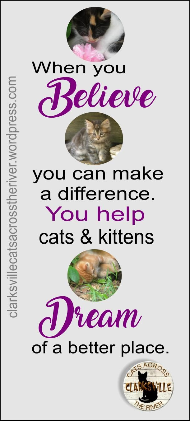 Protected Blog Log In Feral Cats Kitten Adoption Responsible Pet Owner