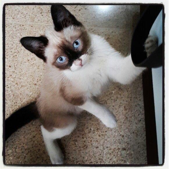 Mi gato pascual
