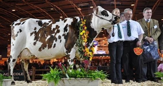 vaches normandes photos | Normande Retrouvez le palmarès de la race normande au Sia 2012