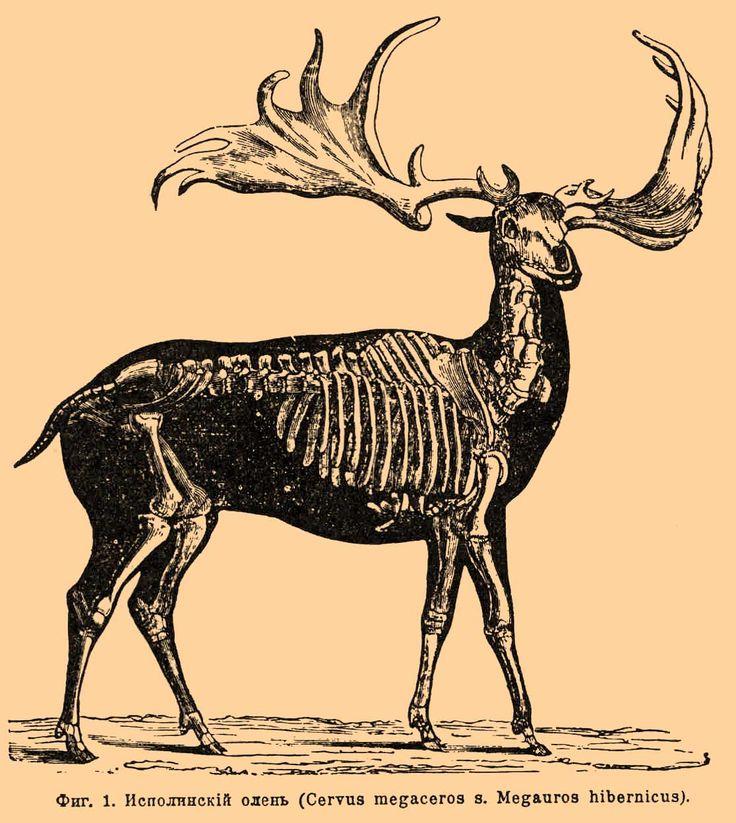 Items similar to Woodland Animal-deer-skeleton-elk antler- Encyclopedic  Dictionary on Etsy