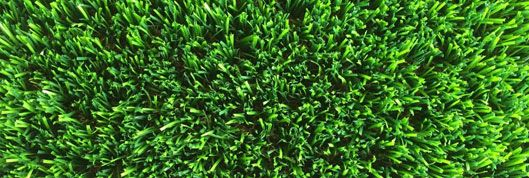 albany green wa turf gurus Perth are leading Manufacturers, Wholesalers and Installers of premium quality artificial grass. Buy factory direct from us at wholesale prices. CALL NOW FOR A FREE QUOTE - 0426046485