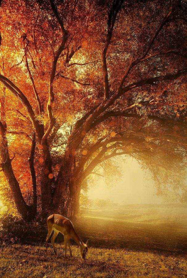 Autumn morning. I would definitely be okay with this being my the view from my back porch #fall #Fall Decor