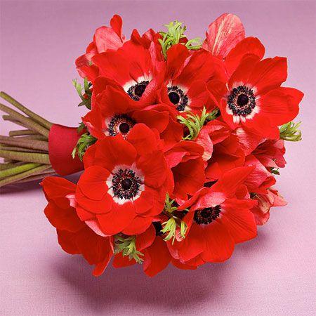 Brides: A Red Anemone Bouquet for a Modern Summer Wedding www.MadamPaloozaEmporium.com www.facebook.com/MadamPalooza