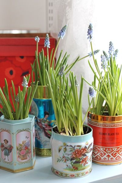 helmililja,kukat,teepurkki,peltipurkki,värikäs