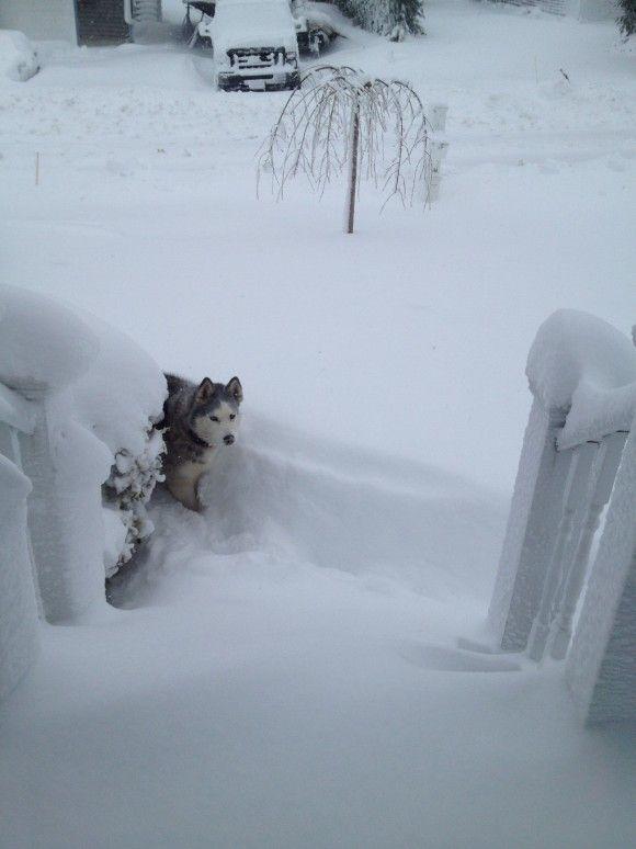 funny snow storm wallpaper - photo #11