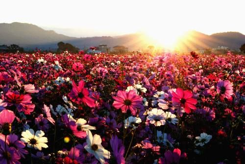 bloemen tapijt