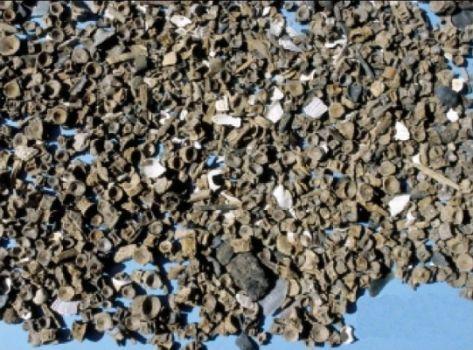 Fish bones from excavation of the Ertebølle settlement at Dragsholm