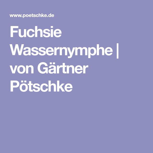 Fuchsie Wassernymphe | von Gärtner Pötschke