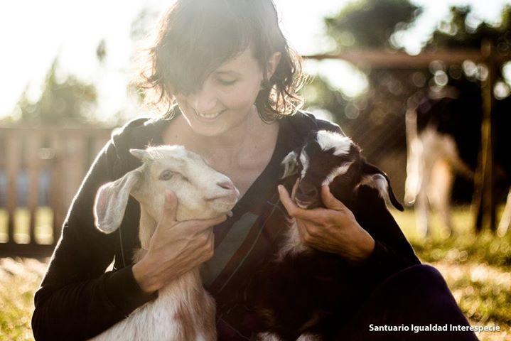 Alicia y Lucas son dos cabras bebés llenas de energía saludables y con muchas ganas de jugar. Sin embargo cuando ven a sus cuidadores se acercan a ellos solo para recibir cariños y abrazos pues al igual que los perros y gatos a las cabras les encanta el cariño <3