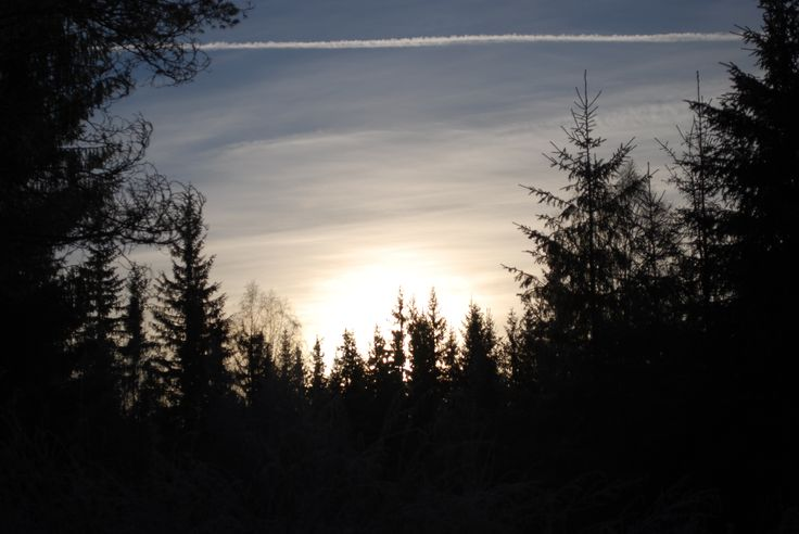 Sunset and shadows through an Autumn forest, awaiting the sleep of Winter and the awakening of spring.