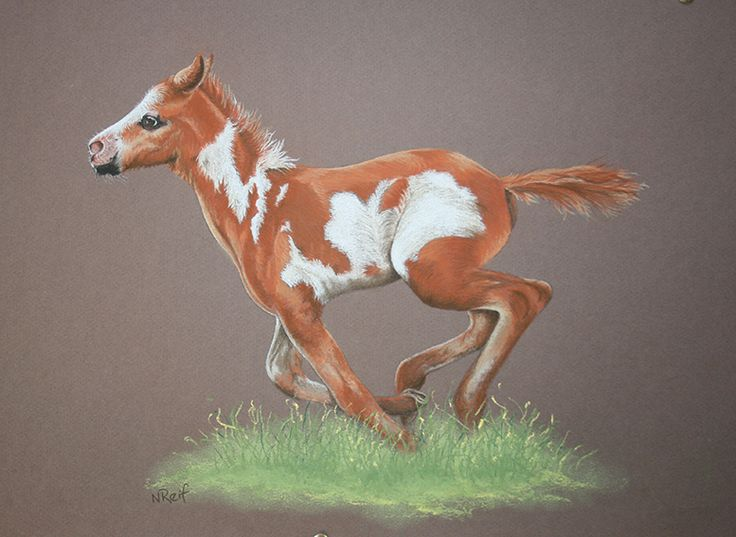 Pinto Foal. Pastel Pencil on Canson Mi Teints Paper. (Photo reference C Emmanuel Keller). Original and prints available for purchase.