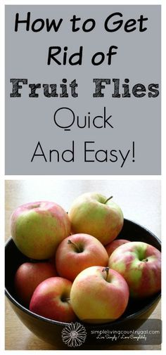 Best tip ever!!  Get rid of those pesky fruit flies without using sprays or fly…